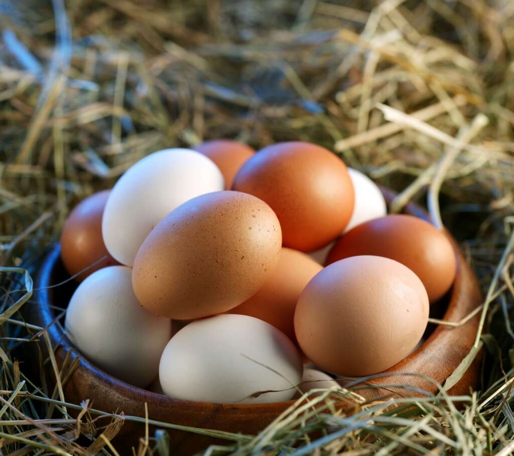 poultry, chicken, eggs, russia birds, uae lifts ban