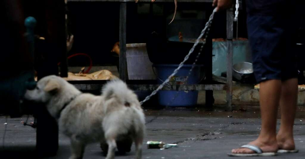 dog meat, china, covid-19