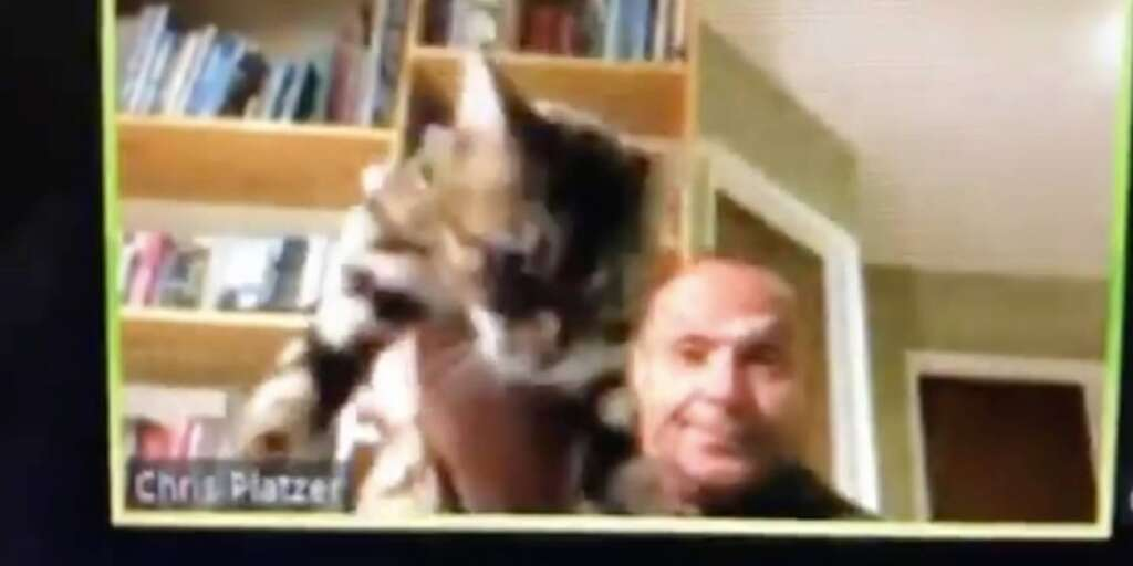vallejo, throws cat, zoom meeting, coronavirus, chris platzer