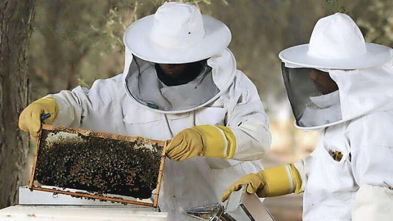 bees, honey farming, uae