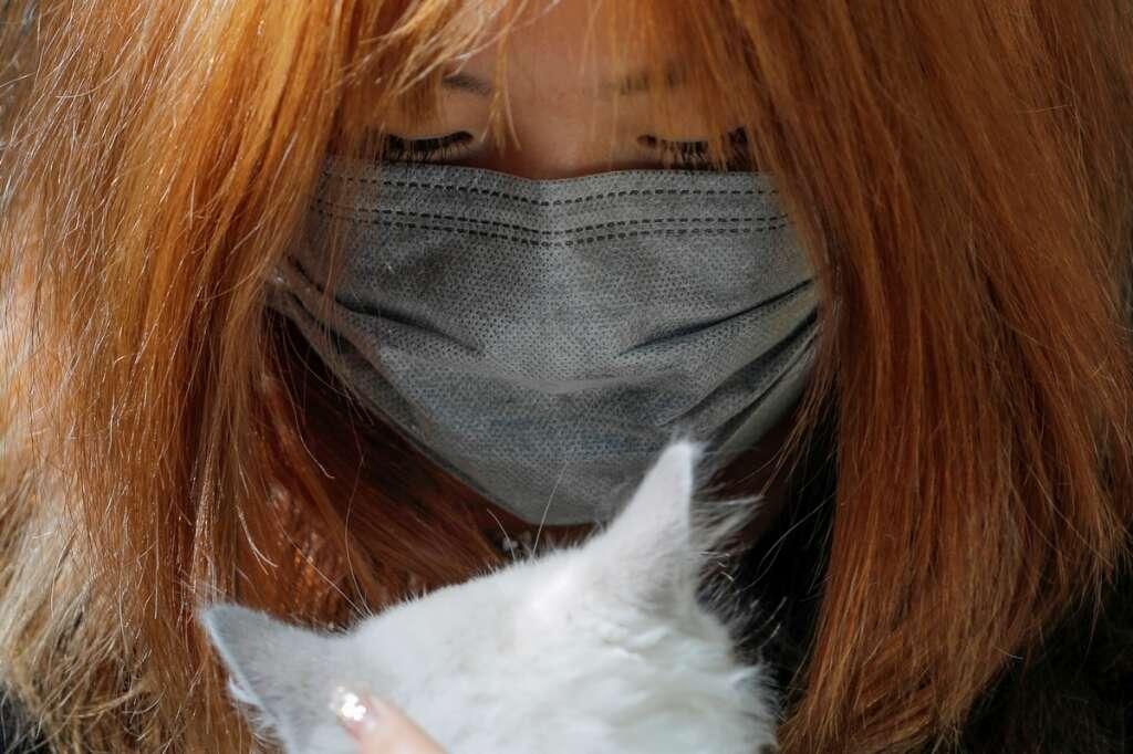 china virus, coronavirus, wuhan, cats dogs thrown in china, india, coronavirus in uae